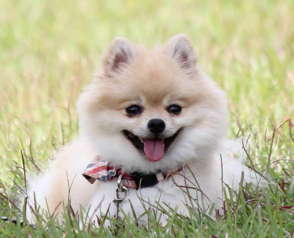 犬・猫のためのペット保険